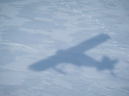 Bird Shadow