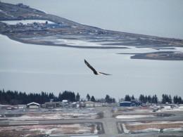 Another Alaskan Aviator